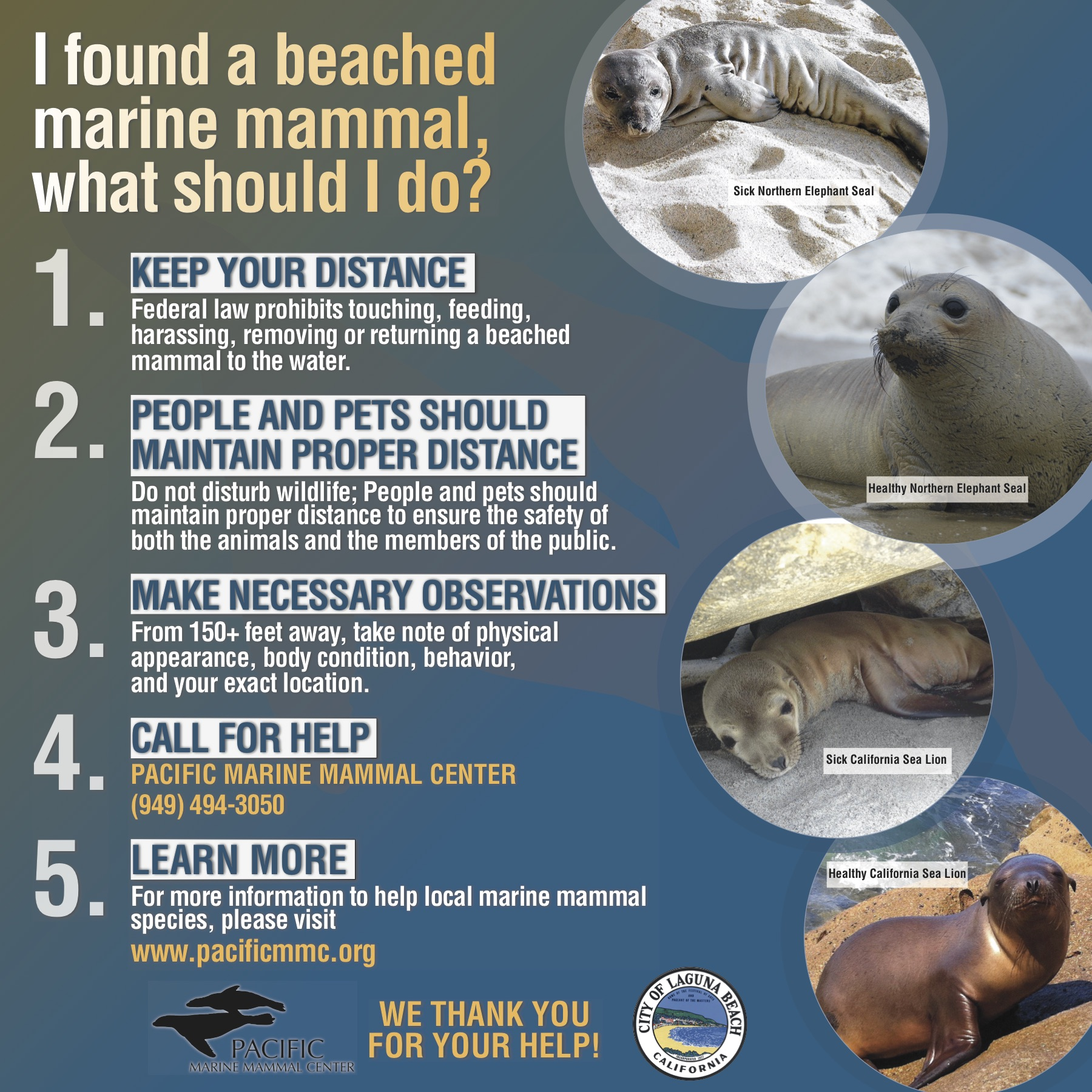 An alert from the pacific marine mammal center crystal cove follow these directions nvjuhfo Image collections
