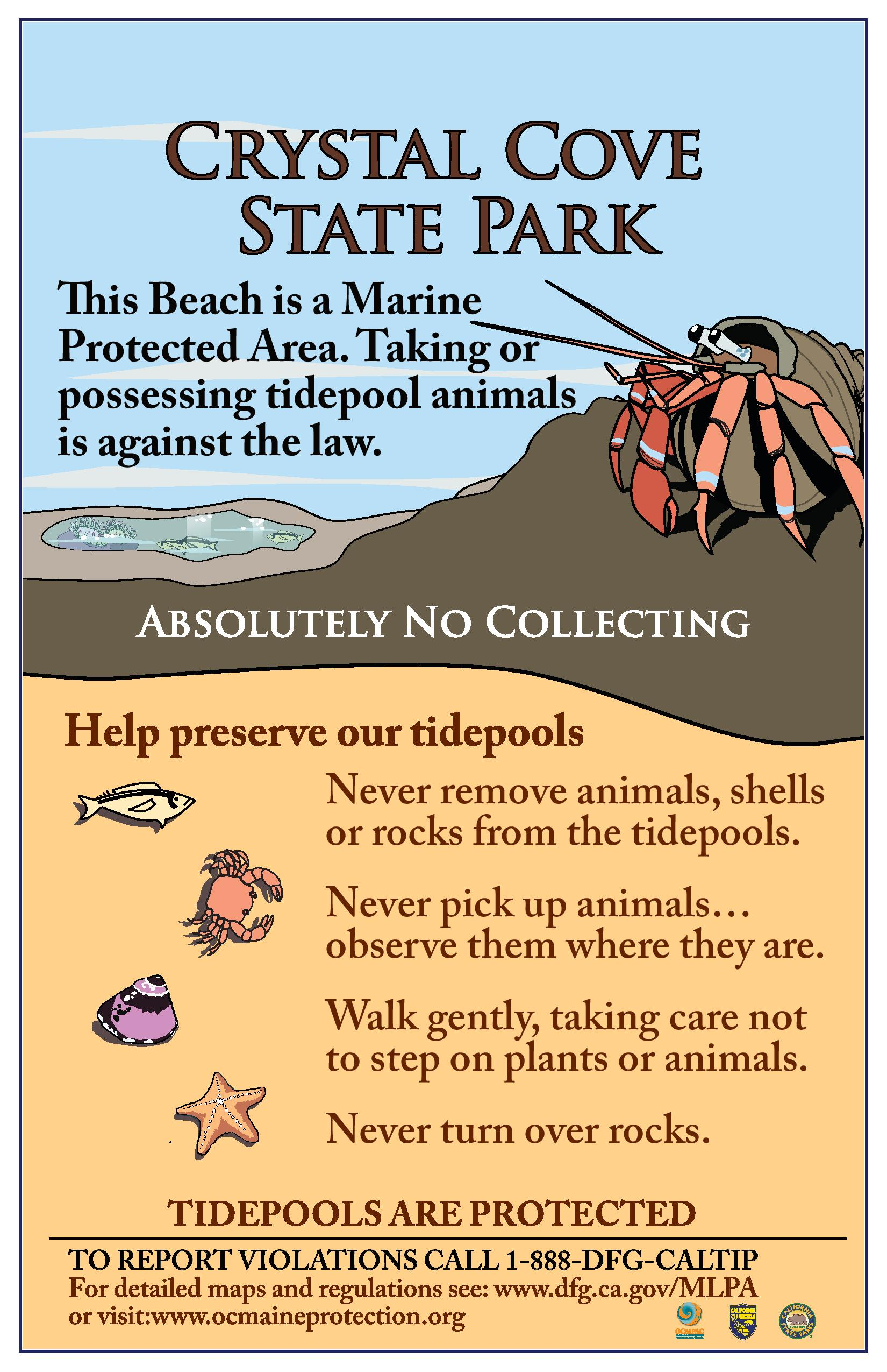 Tidepool etiquette crystal cove tidepool etiquette nvjuhfo Image collections