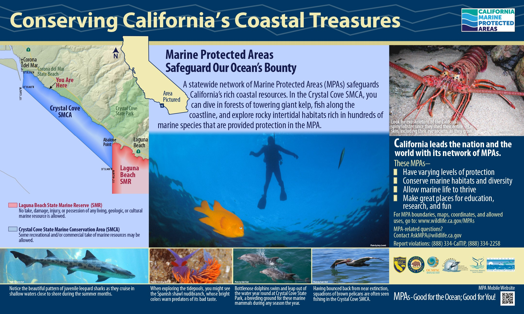 Ocean safety crystal cove marine protected areas nvjuhfo Image collections