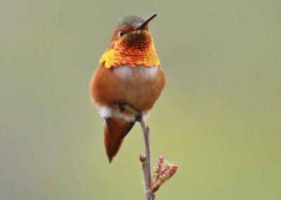 Birds of CCSP